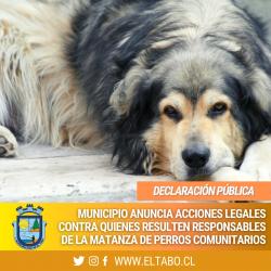Municipalidad de El Tabo anuncia acciones judiciales ante la matanza de 23 perros comunitarios en distintos sectores de la comuna